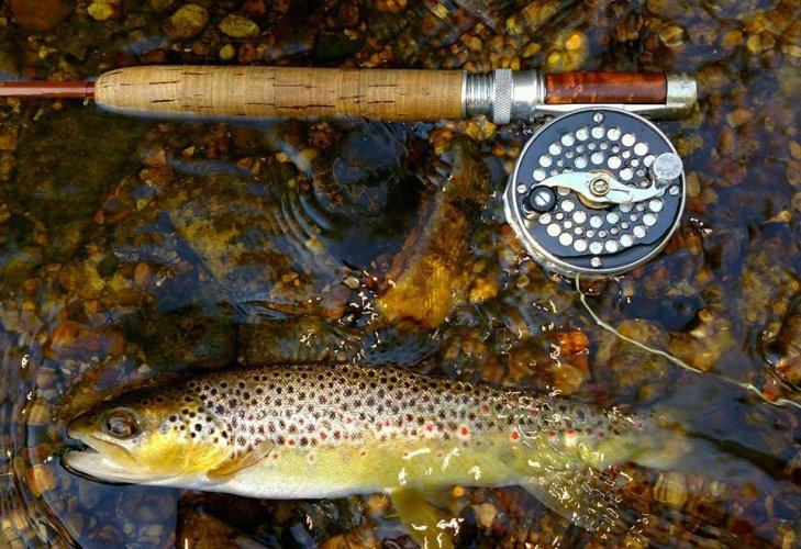 fish-in-creek